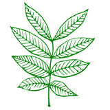 Outline of a green plant Royalty Free Stock Image