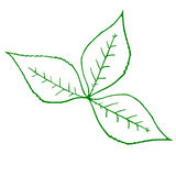 Outline of a green plant Stock Photo