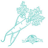 Outline hand drawn sketch of carrots (flat style, thin  line) Royalty Free Stock Images