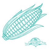 Outline hand drawn sketch of corncob (flat style, thin  line) Stock Image