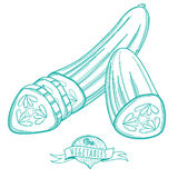 Outline hand drawn sketch of cucumber (flat style, thin  line) Royalty Free Stock Image