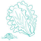 Outline hand drawn sketch of lettuce (flat style, thin  line) Stock Photo