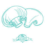 Outline hand drawn sketch of mushrooms (flat style, thin  line) Royalty Free Stock Photography