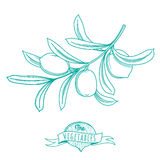 Outline hand drawn sketch of olive (flat style, thin  line) Royalty Free Stock Photos