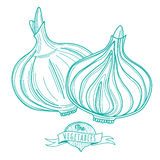 Outline hand drawn sketch of onion (flat style, thin  line) Royalty Free Stock Photos