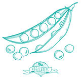 Outline hand drawn sketch of peas (flat style, thin  line) Royalty Free Stock Photo