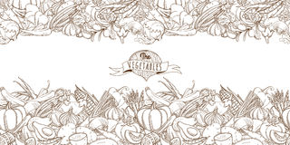 Outline hand drawn sketch seamless vegetable border (flat style, Stock Images