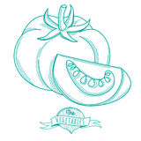 Outline hand drawn sketch of tomato (flat style, thin  line) Royalty Free Stock Images