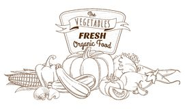 Outline hand drawn sketch vegetable still life composition (flat Stock Photography