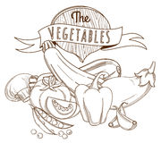 Outline hand drawn sketch vegetable still life (flat style, thin Stock Image