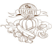 Outline hand drawn sketch vegetable still life (flat style, thin Stock Photography