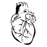 Outline heart human internal organs Royalty Free Stock Images