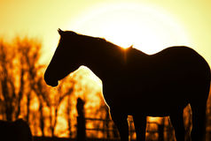 Outline of the horse. Horse profile silhouetted at sunset royalty free stock photography
