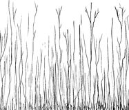 Outline illustration of tall thin trees. Black outline illustration of lanky tall bare tree branches Stock Photos