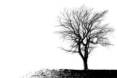 The outline of a leafless tree royalty free stock image