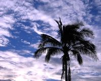 Outline of a Palm Tree. Against the evening sky Stock Image