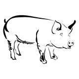Outline pig vector illustration. Can be use for logo or tattoo stock illustration