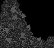 Outline of roses on a black Stock Photo