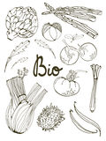 Outline set of fresh hand drawn vegetables Royalty Free Stock Photography