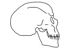 Outline skull. Black outlined skull, resemble real Stock Photography