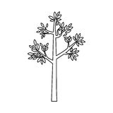 Outline tree with leaves and trunk Royalty Free Stock Photo