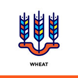 Outline WHEAT icon. Vector pictogram suitable for print, website and presentation Stock Photography