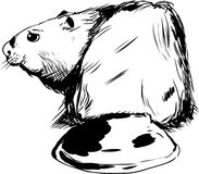 Outlined Beaver Illustration Stock Photography