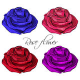 Outlined Blooming Colored Rose Flowers. Royalty Free Stock Image