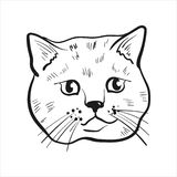 Outlined cat head  drawing.Scottish straight cat illustration. stock illustration