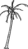 Outlined Coconut Palm Royalty Free Stock Photo