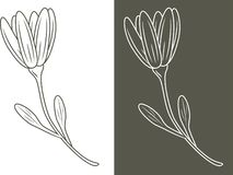 Outlined flower isolated on white and dark background royalty free illustration