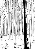 Outlined forest background with tall trees. Outlined freehand illustration of forest wilderness background with tall trees Royalty Free Stock Images