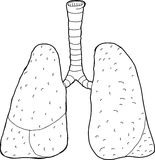 Outlined Lungs Stock Photos