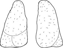 Outlined Pair of Lungs Royalty Free Stock Images