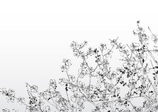 Outlined spring Stock Images