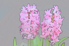 Outlines  flowers hyacinth Royalty Free Stock Photography