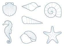 The outlines of sea creatures. Outlines of sea shells, seahorse and starfish Royalty Free Stock Photo