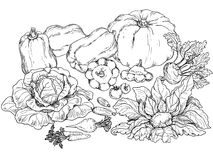Outlines of various vegetables royalty free illustration
