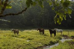 Outlook on a horse pasture. After a long journey a group of horses enjoys the last light of the day on their pasture Stock Images