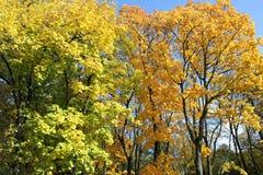 outono Árvores amarelas Bancos imagem de stock