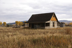 Outono, árvores douradas e edifícios de exploração agrícola velhos Imagens de Stock Royalty Free