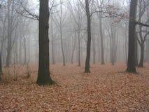 Outono 1 Foto de Stock