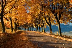 Outono Fotos de Stock