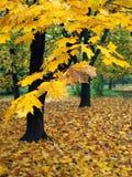Outono Imagens de Stock Royalty Free