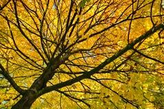 Outono #5 Fotos de Stock Royalty Free