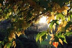 outono Imagens de Stock