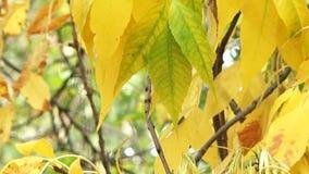 outono vídeos de arquivo