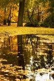 Outono 6 Fotografia de Stock Royalty Free
