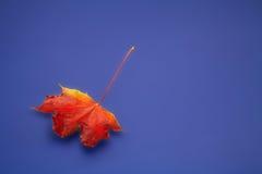 Outono. Imagens de Stock