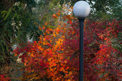 outono Foto de Stock Royalty Free